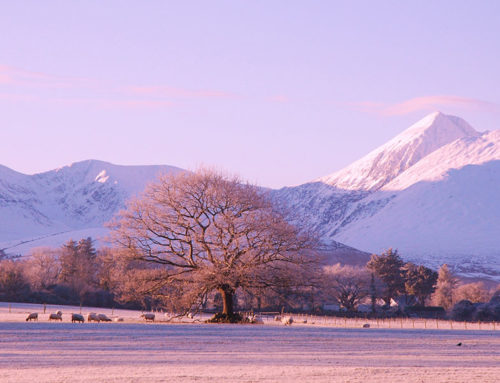 A View of The Reeks